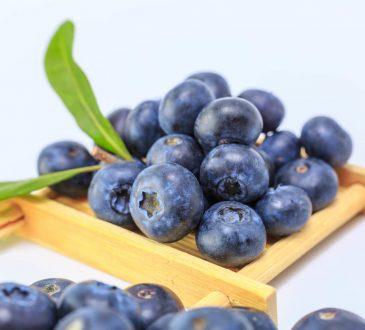 borovnica, voće