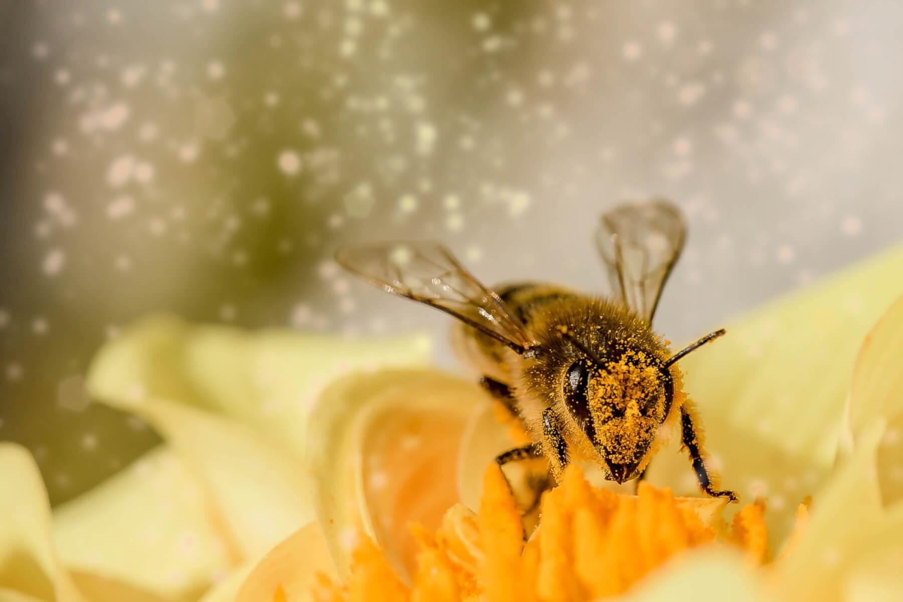 med, pčele, bolesti