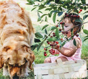 voće. prehrana